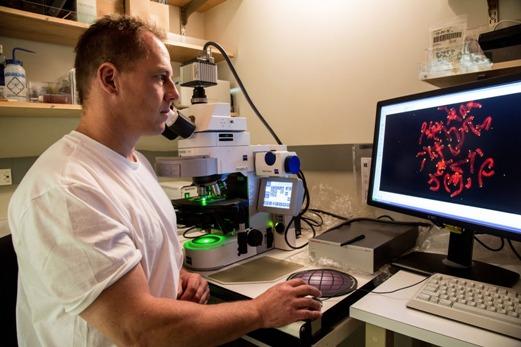 Профессор молекулярной и клеточной биологии Института биологических исследований Солка Ян Карлзейдер (Jan Karlseder) в лаборатории.