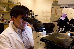 Шухрат Миталипов (Shoukhrat Mitalipov), PhD, старший научный сотрудник Орегонского национального центра изучения приматов.