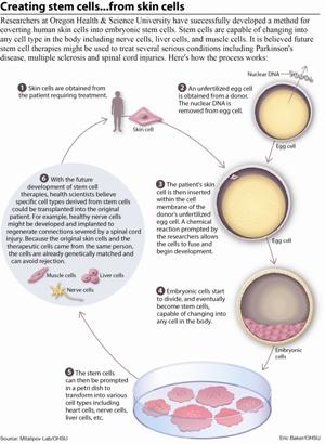 Ученые установили, что ключевыми факторами, ответственными за результаты перепрограммирования методом переноса ядер соматических клеток (SCNT), являются преждевременный выход ооцитов человека из мейоза и их субоптимальная активация. Оптимизированный SCNT-подход, разработанный для преодоления этих ограничений, позволил получить человеческие NT-ЭСК. Эмбриональные стволовые клетки, полученные методов переноса ядер соматических клеток, демонстрируют нормальный диплоидный кариотип и наследуют ядерный геном исключительно соматических родительских клеток. Экспрессия генов и профили дифференциации человеческих NT-ЭСК аналогичны таковым ЭСК, полученных из эмбрионов, что говорит об эффективном перепрограммировании соматических клеток в плюрипотентное состояние.
