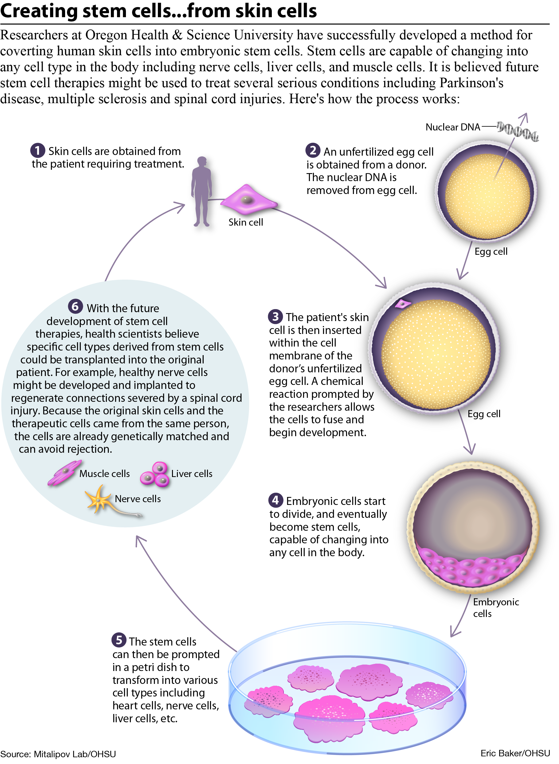 we need embryonic stem cell research essay
