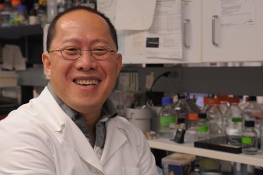 Профессор Дуншэнь Дуань (Dongsheng Duan) и его группа смогли смягчить симптомы мышечной дистрофии у собак с моделью мышечной дистрофии Дюшенна, используя методы генной терапии.